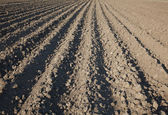 Plowed land — Stock Photo