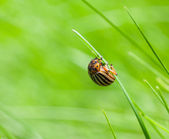 Pest bag on grass — Stock Photo