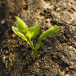 New sprout at old tree trunk — Stock Photo #34182835