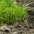 Grass on arable land — Stock Photo