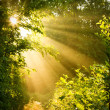 Early morning sun in forest — Stock Photo #34405305