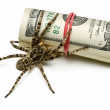 Venomous spider stand guard of cash isolated on white — Stock Photo
