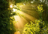 Early morning sun in forest — Stock Photo