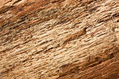Close-up of bark inner side — Stock Photo