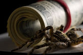 Spider and dollars - money protection concept — Stock Photo