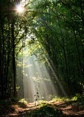 Woodland road and sunbeams — Stock Photo
