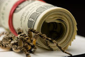 Tarantula and dollars roll - savings protection concept — Stock Photo