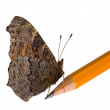 Butterfly on lead pencil isolated on white — Stockfoto