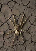 Deadly danger spider in wasteland — Stock Photo