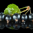 Blackcurrant with leaf — Stock Photo #35177319