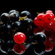 Red and black currant berry — Stock Photo #35177343