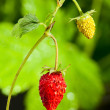 Macro of strawberry — Stok fotoğraf