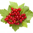 Bunch of red currant on leaves — Stock Photo #35178397