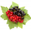 Bunch of red and black currant — Stock Photo #35178435