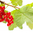 Red currant bunch — Stock Photo #35178465