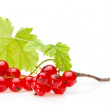 Red currant bunch — Stock Photo #35178479