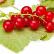 Red currant branch — Stock Photo