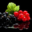 Red and black currant bunches — Stock Photo #35178557