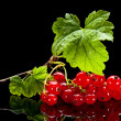 Bunch of red currant — Stock Photo #35178561