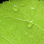 Rain drops on green leaf — Stock Photo