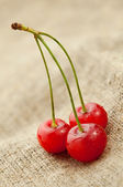 Red cherry on hessian — Stock Photo