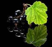 Bunch of black currant — Stock Photo