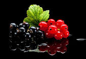 Red and black currant bunches — Stock Photo