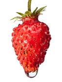 Macro of juicy strawberry — Stock Photo