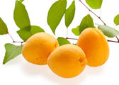 Three fresh apricots — 图库照片