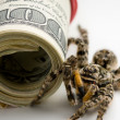 Tarantula and bank notes — Stock Photo