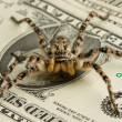 Tarantula and money — Stock Photo