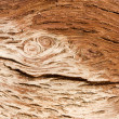 Old tree bark  — Stock Photo