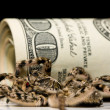 Poison spider near dollar roll — Stock Photo
