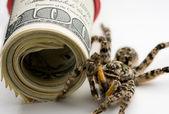 Tarantula oraz banknotów — Zdjęcie stockowe