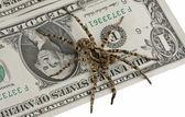 Nota de um dólar e aranha veneno — Fotografia Stock
