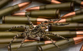 Spider safeguard weapon — Stock Photo