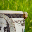 Dollar banknote eaten by caterpillar - economic crisis concept — Stock Photo