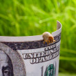 Macro of caterpillar gnaw banknote - lost savings concept — Stock Photo