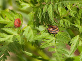 Striped bug at sunny summer day — Stock Photo
