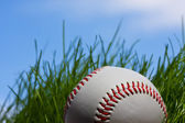 Baseball lost in the grass — Stock Photo