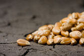 Golden grains on wasteland background — Stock Photo