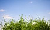 草で失われたテニス ・ ボール — ストック写真