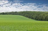 Cloudscape over green farm fields — Stock Photo