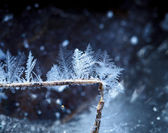 Winter xmas decoration — Stock Photo
