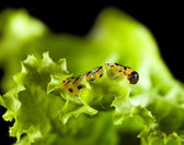 Macro of pest caterpillar — Stock Photo