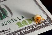 Larva nibble money, finance crisis concept — Stock Photo