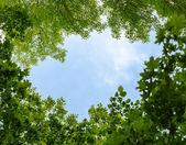 Natuurlijke frame van bomen over blauwe hemel — Stockfoto