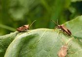 Vermin bugs — Stock Photo