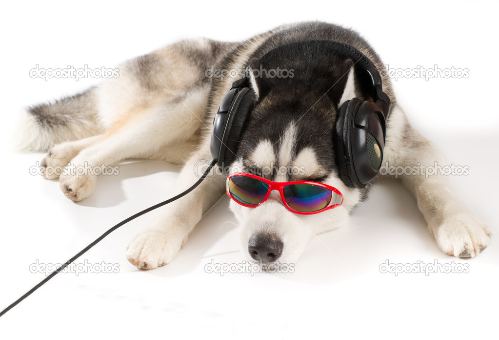 Relax My Dog - Music For Dogs - Android Apps on Google Play