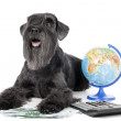Foto Stock: Dog with globe